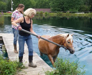 Judy swims Novari a few laps for exercise and conditioning. This is a great way to keep the horses healthy and fit.